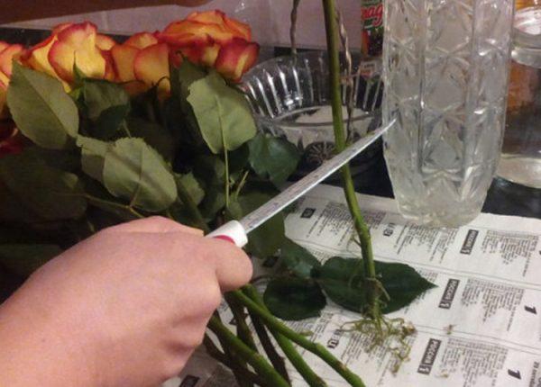 Kak-dolshe-sohranit-srezannye-rozy-v-vaze-s-vodoj-sovety-cvetovodov-5