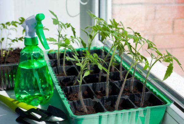 Посадите семена в марте этим способом для здоровой и крепкой рассады! 5 простых советов.