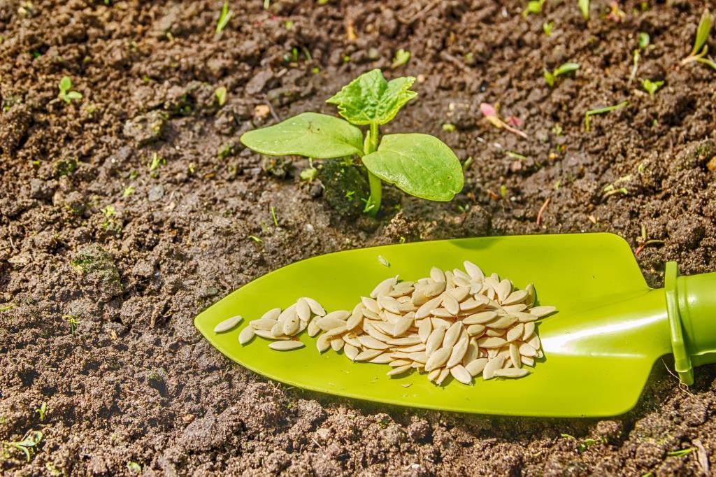 Картинки по запросу Подготовка семян к посадке на рассаду