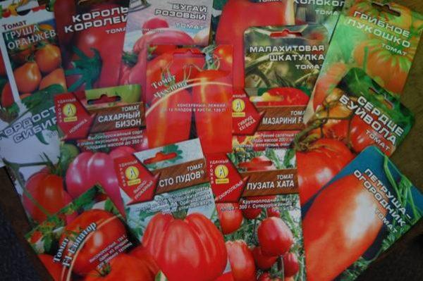 Kak-vybrat-semena-tomatov-na-rassadu