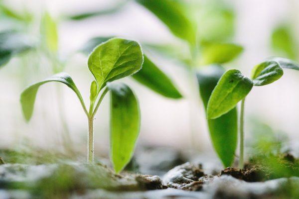Сеем овощи правильно или пять главных ошибок при посеве овощных культур