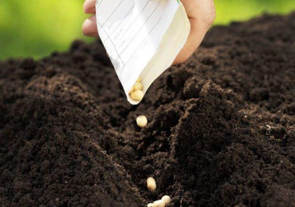 pravila-posadki-ovoshchey-semena