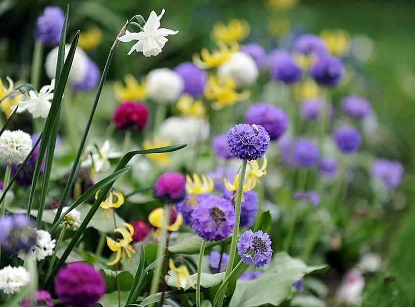 Десять самых ранних цветов для сада. Самые красивые весенние цветы
