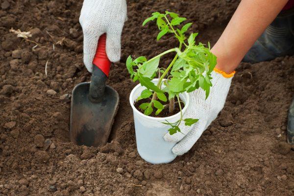 Выращивание рассады: 15 самых серьёзных ошибок