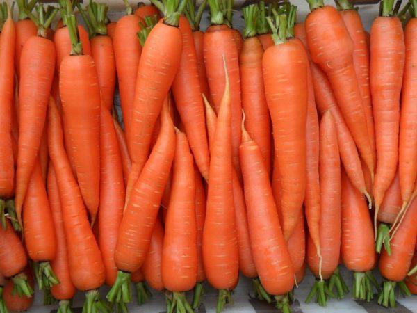 Vyrashhivanie-morkovi-v-otkrytom-grunte