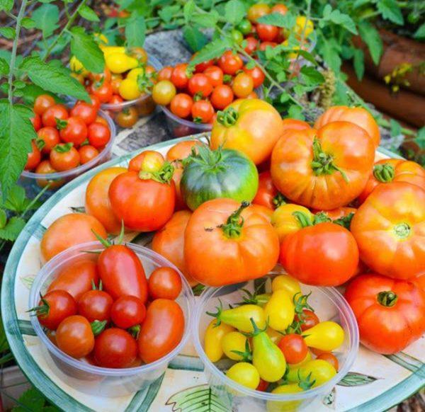 kak-vybrat-sort-pomidor