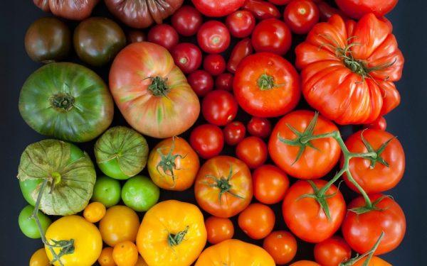 sorta-tomatov