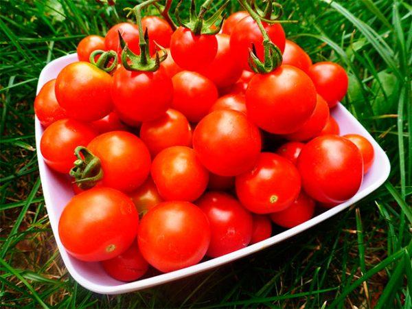 Sorta-pomidor-dlya-zasolki-i-konservirovaniya