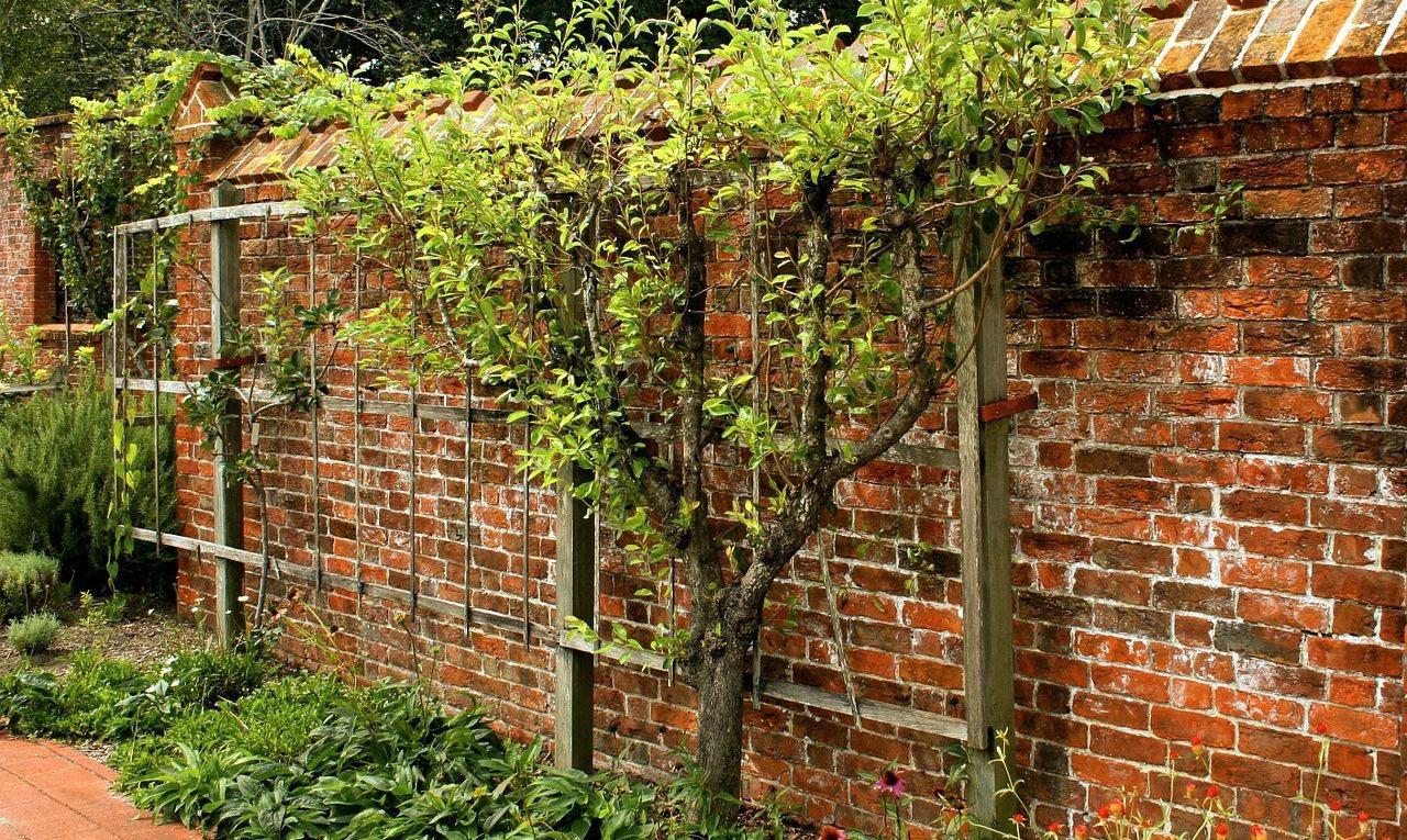 Картинки по запросу Основные правила посадки и выращивания винограда
