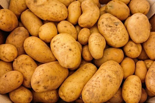 obrabatyvaem-kartofel-pered-posadkoj-ot-fitoftory
