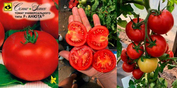 tomat-anyuta-opisanie-2
