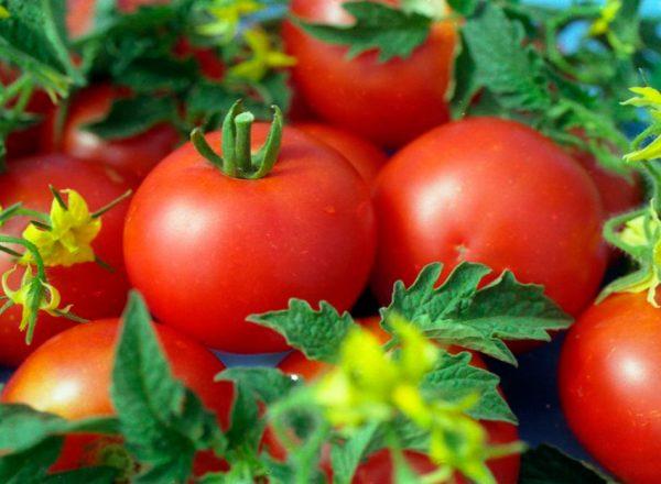 tomat-anyuta-opisanie-3