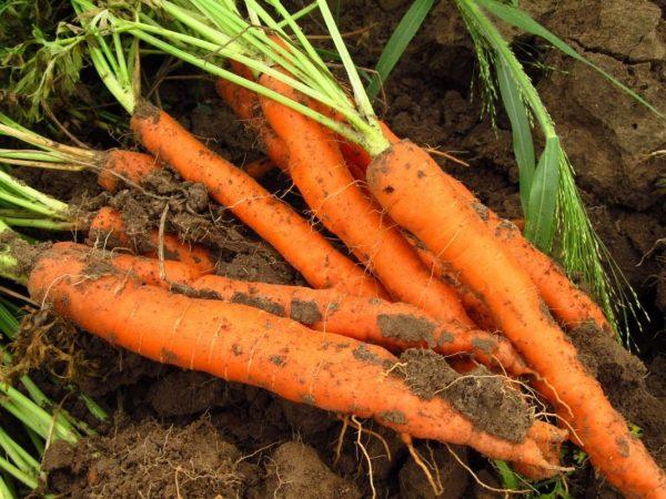 carrots-03