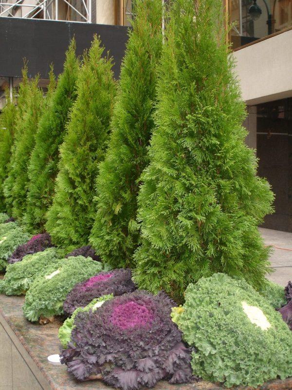 conifer-garden-01