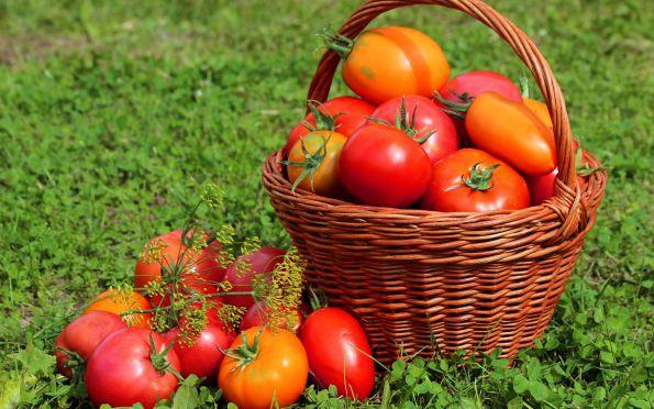kak-pravilno-uhazhivat-za-pomidorami-chtoby-poluchit-horoshij-urozhaj