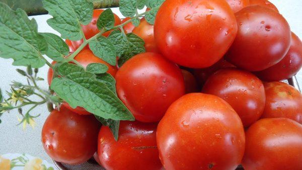 tomat-sanka