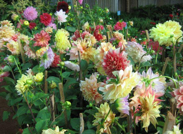 Flowers_178
