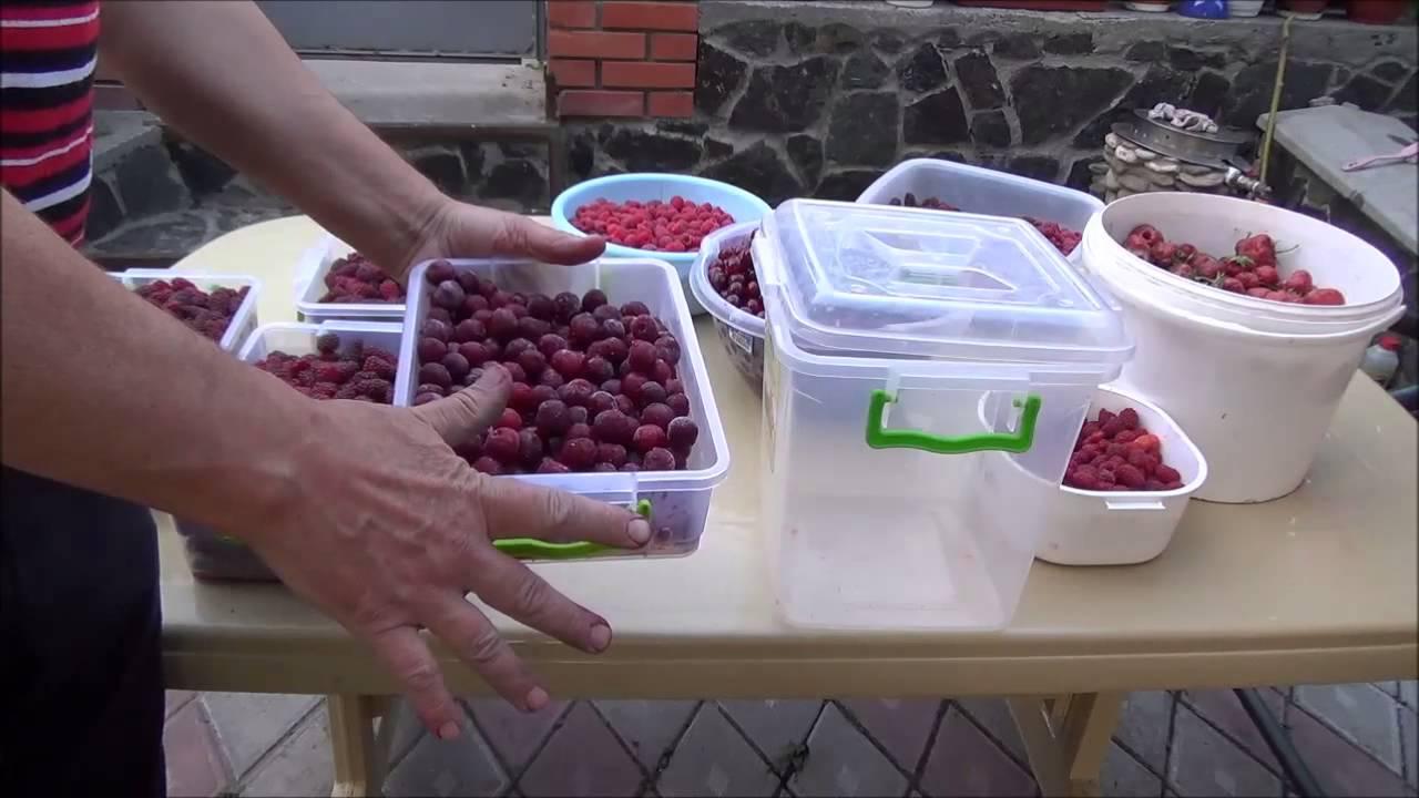 Картинки по запросу заморозки ягод и фруктов
