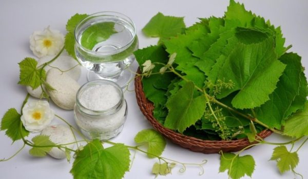 vinogradnye-listya-chem-polezny-gde-ispolzuyut-i-kak-zagotavlivayut-3
