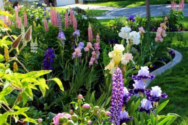 Garden-06-640x427
