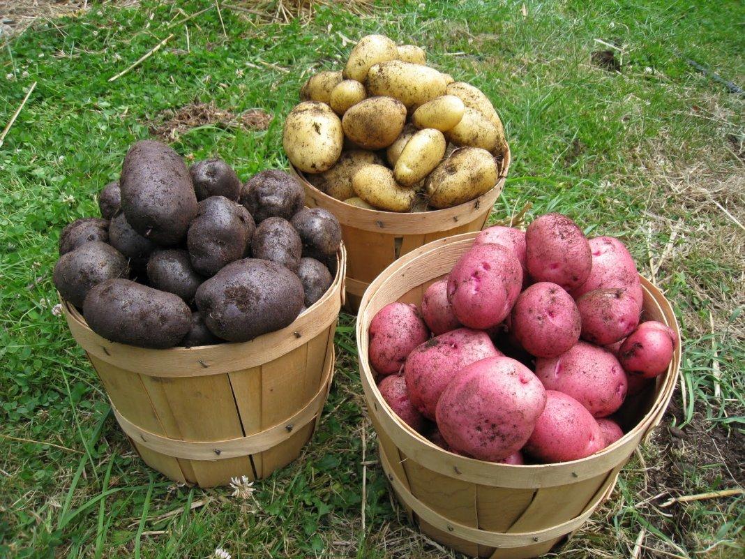 Картинки по запросу Советы по уборке урожая для получения самых свежих овощей