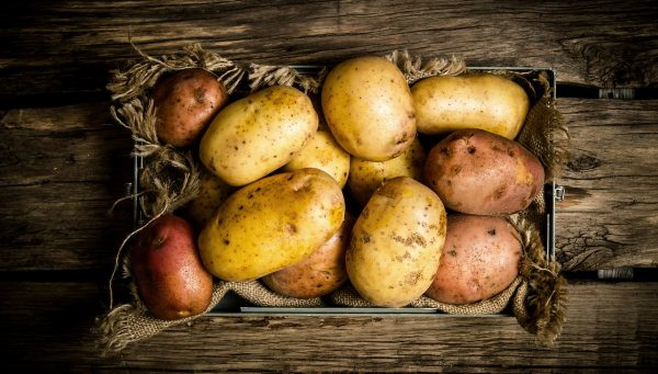 Когда выкапывать картофель и собирать урожай на хранение: выкапываем урожай вовремя