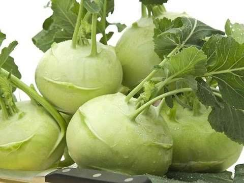 Капуста кольраби — как правильно сохранить урожай в зимние месяцы?