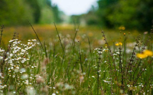 Определяем по сорнякам какая почва на участке. Как узнать и зачем это надо?