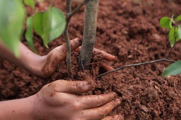 Какие плодовые деревья сажают осенью: как правильно подготовить саженцы к посадке?