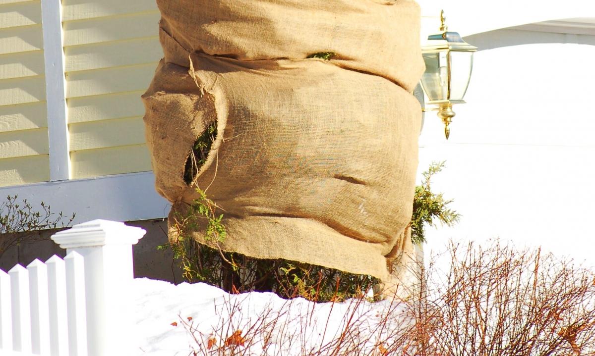 Картинки по запросу Процедура укрытия участка с растениями на зимний период