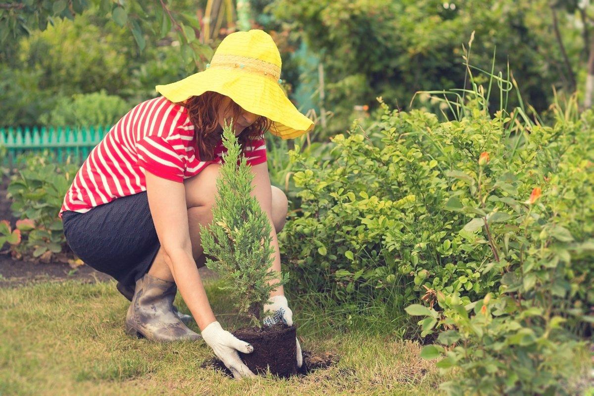 Картинки по запросу Процедура посадки новых растений