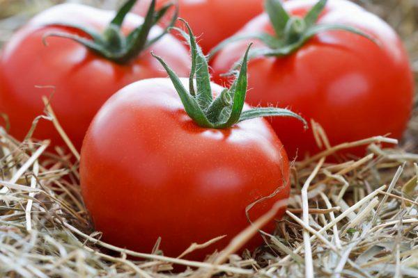 sohranyaem-nadolgo-tomaty-svezhimi-chto-nuzhno-delat-chtoby-tomaty-byli-vsegda-svezhimi-1