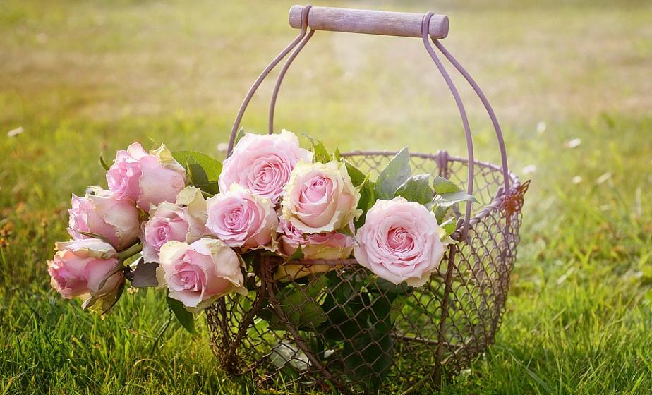 """Картинки по запросу """"Готовим розы к зиме – 13 полезных советов для начинающих цветоводов"""""""""""