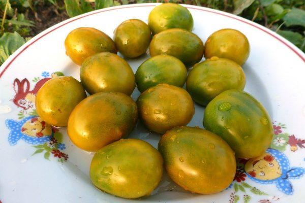 ekzoticheskie-cherri-zelenoplodnye-krasavtsy-u-nas-v-ogorode-vkusno-ili-bespolezno-11