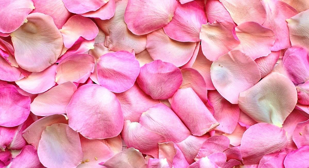 Картинки по запросу Варенье из лепестков чайной розы
