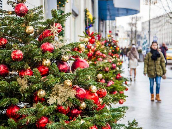 Как экологично и с пользой использовать елку после Нового года?