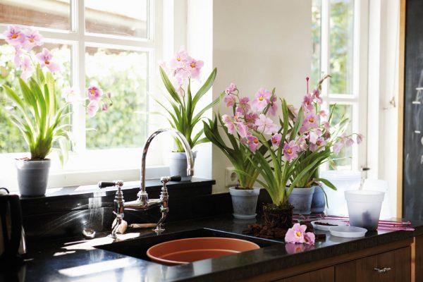 Green-Basics-Orchid