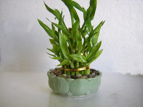 lucky-bamboo-3-tiered