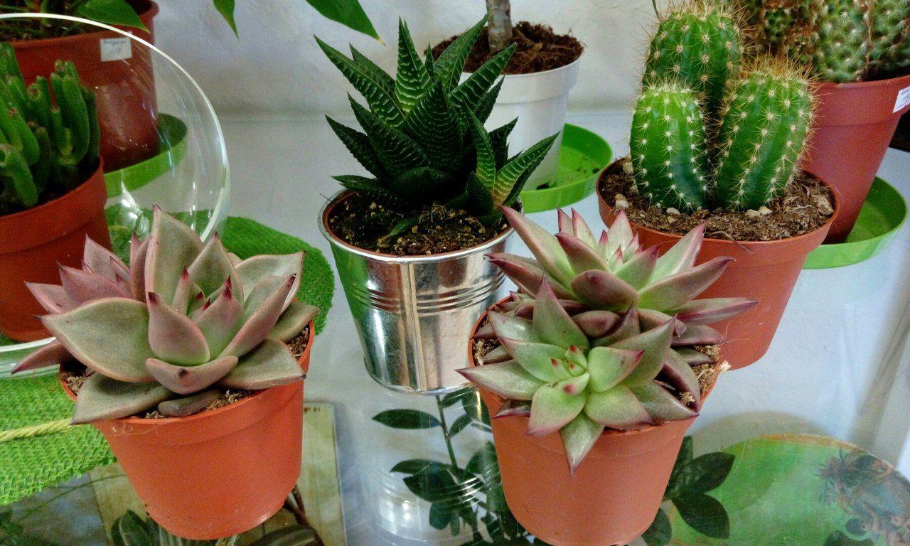 Картинки по запросу Лечебные комнатные растения