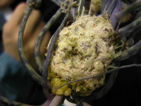 Bacterial-diseases-plant