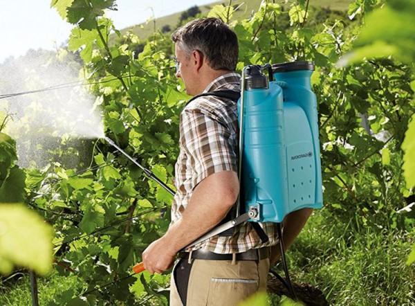 Opryskivanie-vinograda-vesnoj-ot-boleznej-i-vreditelej