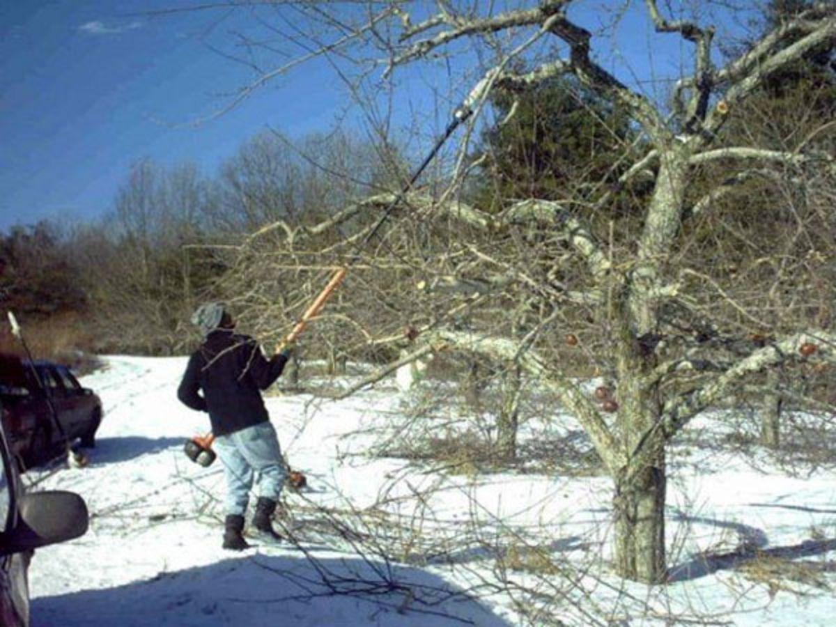 """Картинки по запросу """"деревья  удаления льда и снега"""""""