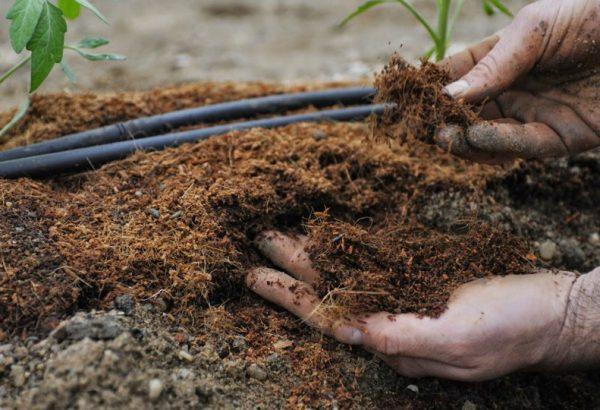 Какие садовые растения весной остро нуждаются в подкормке азотными и минеральными удобрениями