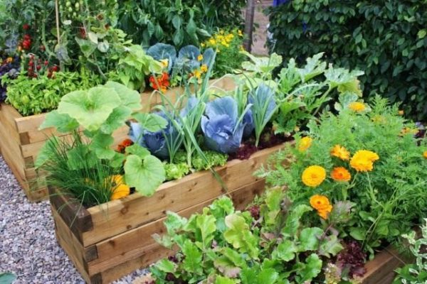 garden-640x427-1
