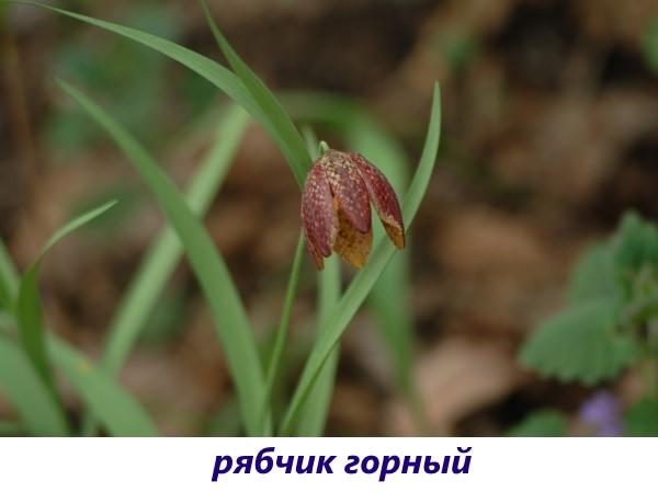 vidy-ryabchika-8