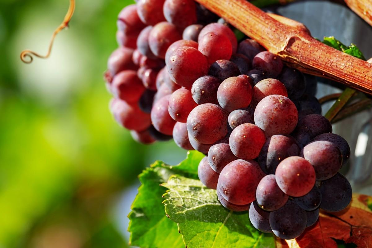 Обрезка винограда весной в пошаговом описании видео