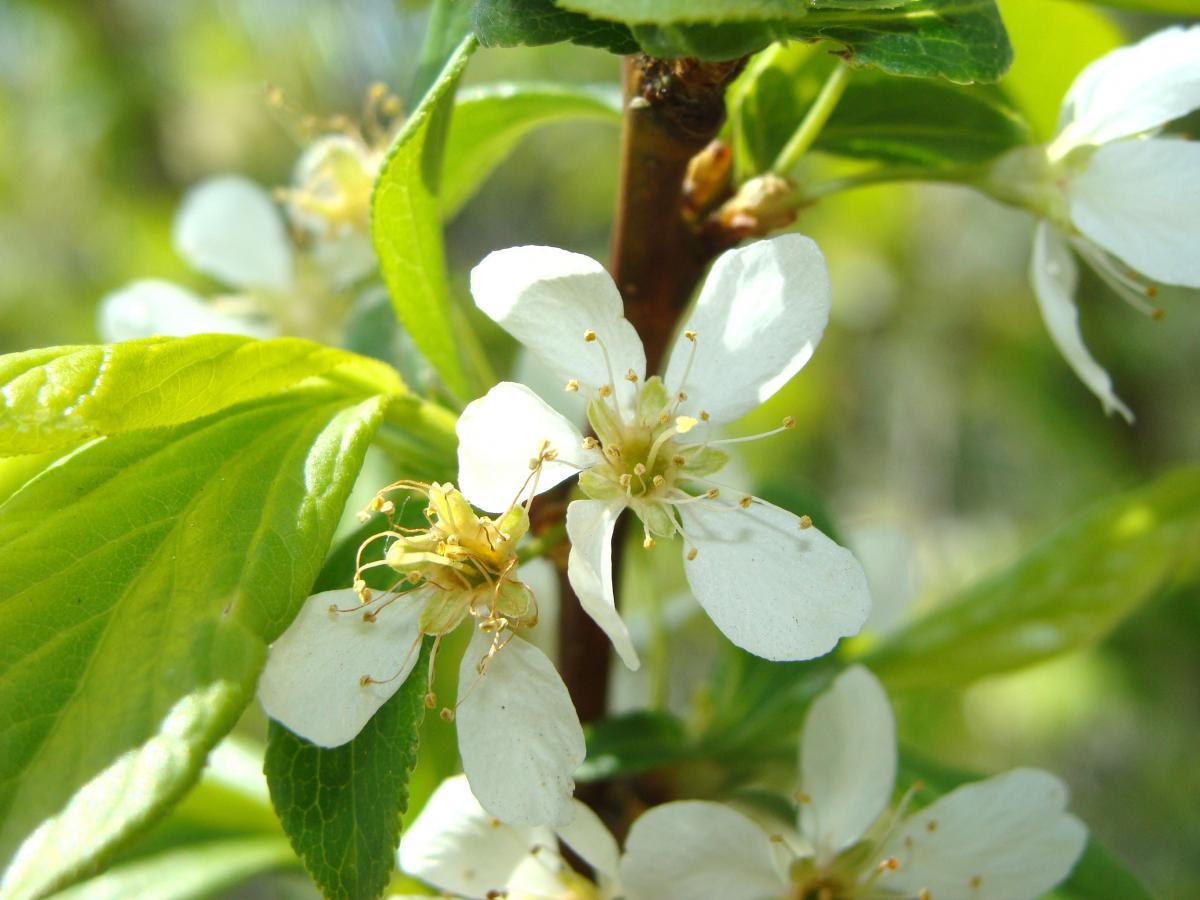 Сад весной, чем обработать от болезней и вредителей, весенние ...