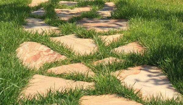 Trava-mezhdu-kamnej