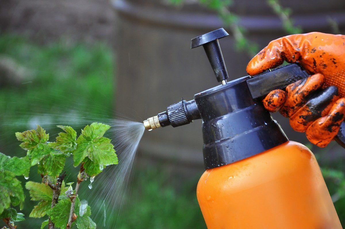 Обработка смородины и крыжовника от вредителей весной, летом и ...