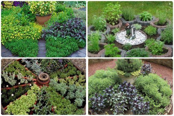 Gardening | Зеленые культуры
